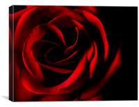 Red Rose on Black, Canvas Print