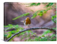 Robin in the Forest, Canvas Print