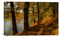 Woodland around Damflask Reservoir, Canvas Print