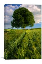 Barley Field & The Sentinel,Somerset, Canvas Print