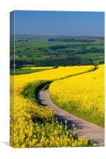 Rapeseed field near Damflask Reservoir, Canvas Print
