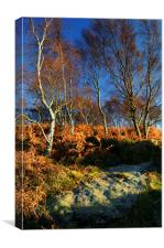 Silver Birch on Froggatt Edge, Canvas Print