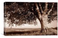 Beech Tree in Sepia, Canvas Print