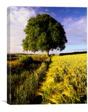 Oak and Barley, Canvas Print