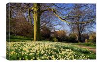 Sheffield Botanical Gardens in Spring, Canvas Print