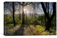 Bluebell Sunrise, Canvas Print