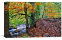 Rivelin Woodland Walk, Canvas Print