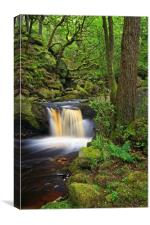 Padley Gorge                     , Canvas Print