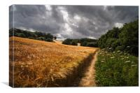 Barley Fields and Footpath, Eckington             , Canvas Print