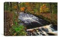 Roscoe Weir,Rivelin in Autumn                     , Canvas Print