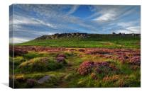 Higger Tor Heather, Canvas Print