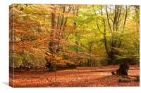Epping Forest Autumn 4, Canvas Print