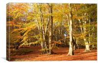 Epping Forest Autumn 6, Canvas Print