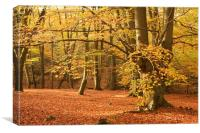 Epping Forest Autumn 8, Canvas Print