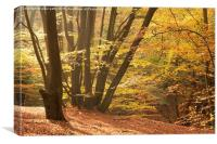 Epping Forest Autumn 10, Canvas Print