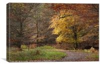 Epping Forest 1   , Canvas Print