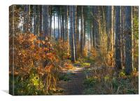 Sherwood Forest, Canvas Print