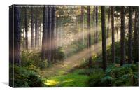 Woodland Rays , Canvas Print
