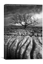 Scarred Landscape (Mono), Canvas Print
