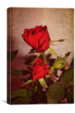 Red roses., Canvas Print