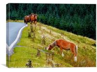 Horses on the Brecon Beacons, Canvas Print