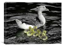 Keeping up with Mum                             , Canvas Print