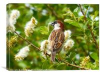 Gathering Nesting Material                    , Canvas Print