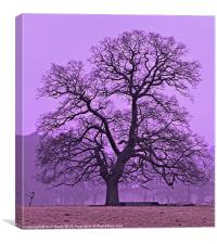 Tree on a winters morning, Canvas Print