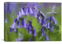 Bluebell Arch, Canvas Print