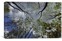 Tree canopy in the spring, Canvas Print