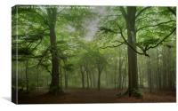 Rainy Day at Wendover Woods, Canvas Print