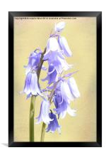 Bluebells on Cream, Framed Print