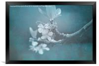 Apple Blossom Blues., Framed Print