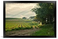 Crop and Countryside, Framed Print