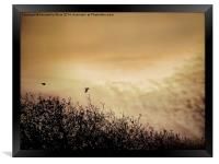 Fly By Dawn, Framed Print