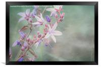 Lilac Looking Glass Flower, Framed Print