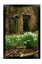 snow drops brecon beacons wales, Framed Print