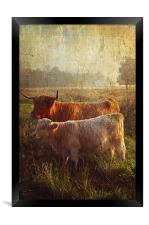 Highlanders. Scottish Countryside, Framed Print