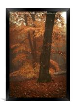 Misty Woods, Framed Print