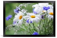 Daisies and Cornflowers                           , Framed Print