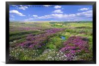 Yorkshire Moors Heather and Cottongrass landscape, Framed Print