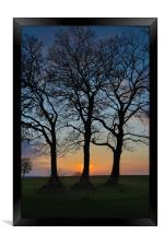 Three trees in silhouette, Framed Print