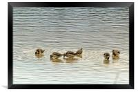 Even the Smallest of Us Can Cause Ripples, Framed Print