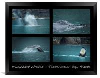 Humpback Whales Collage, Framed Print