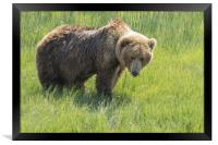Don't Mess with Mama Bear, Framed Print
