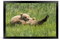 My Foot's So Pretty, Oh So Pretty - Bear Cubs, No., Framed Print