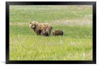 Mother Brown Bear With Her Two Cubs, No. 1, Framed Print