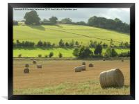 Hay Bales at Nettleden, Framed Print