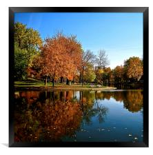 Reflection in the Park, Framed Print