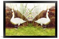 Reflections of a Swan, Framed Print